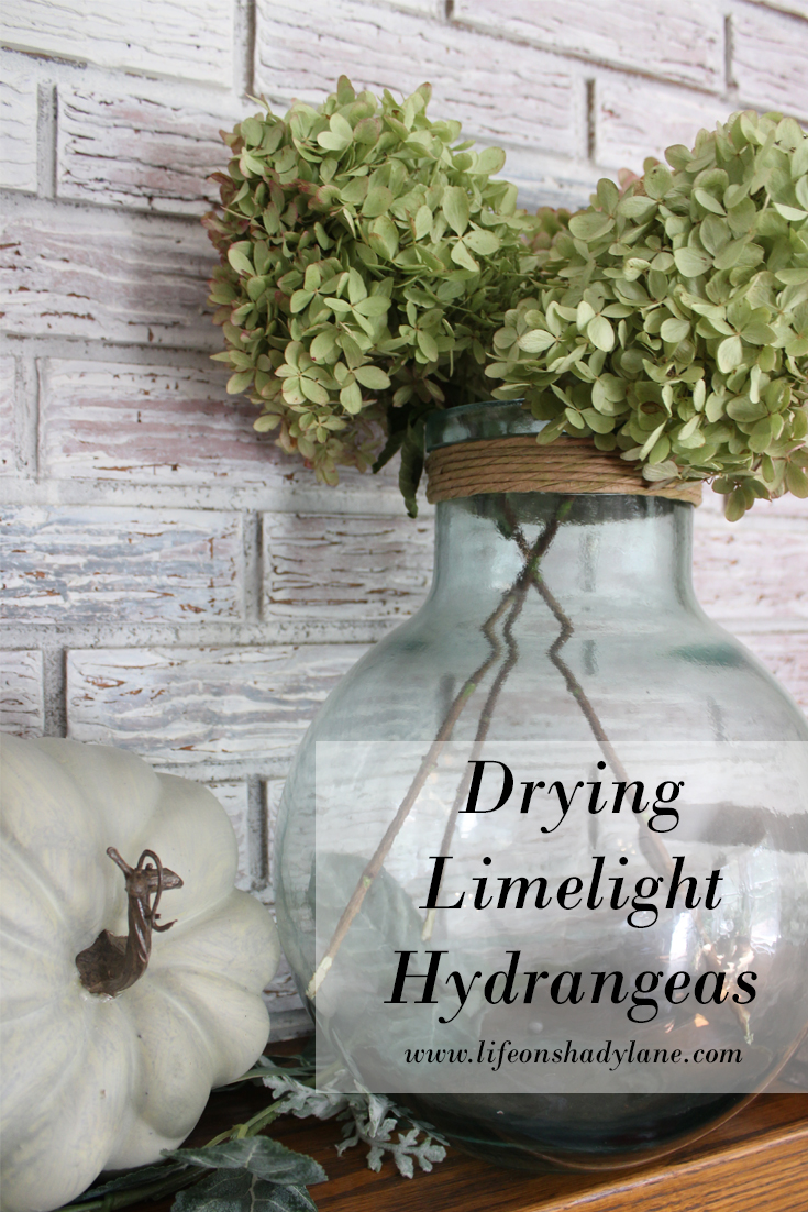 How to dry limelight hydrangeas - easy and FREE fall decor! - (Drying limelight hydrangeas)