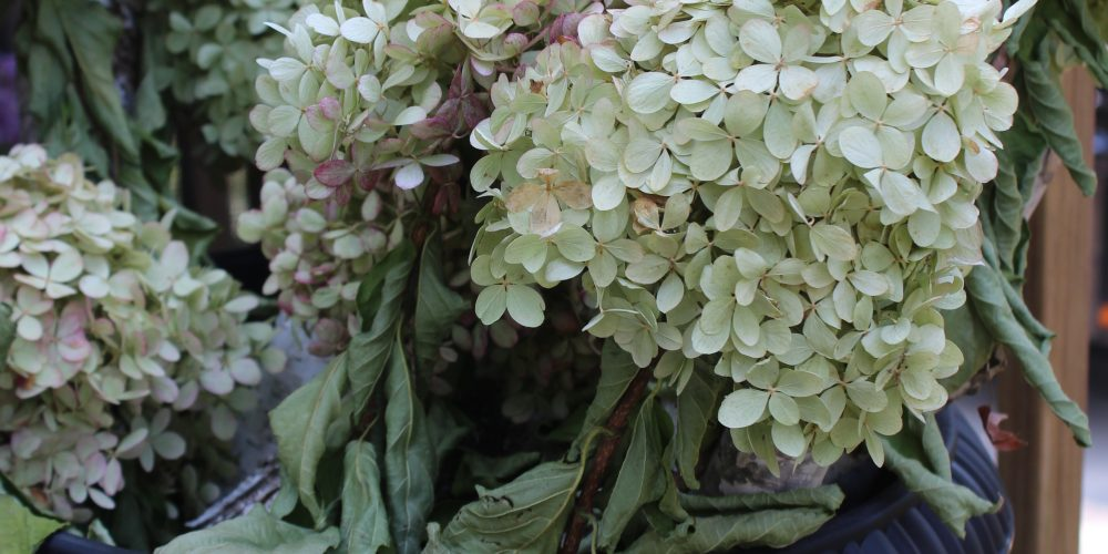 How to dry limelight hydrangeas - easy and FREE fall decor!